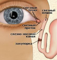 Демонстрация устройства слезного канала
